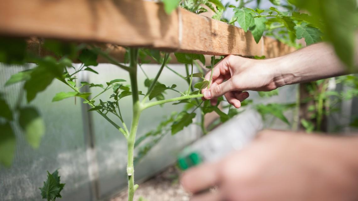 Új filozófia terjed Borsodban: egyre többen állnak át rá az agráriumban