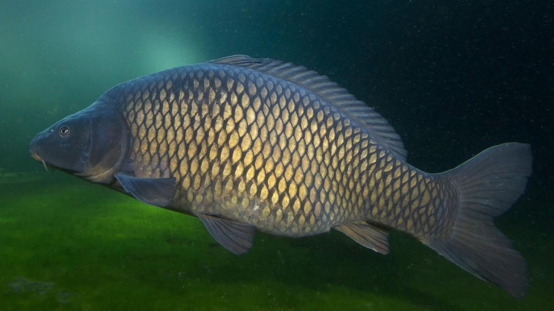 Kiderült, honnan hozzák a friss halat a hazai élelmiszerláncok