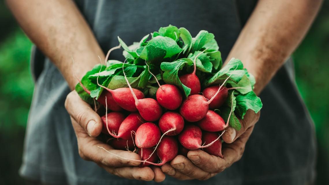 Egészséges étel helyi gazdáktól: a kistermelők menthetik meg a magyar vidéket