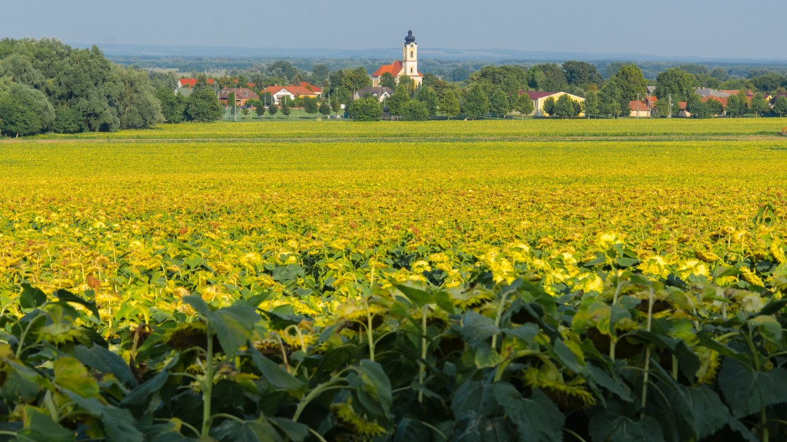 Veszély a termőföldeken: fogynak a mikroorganizmusok