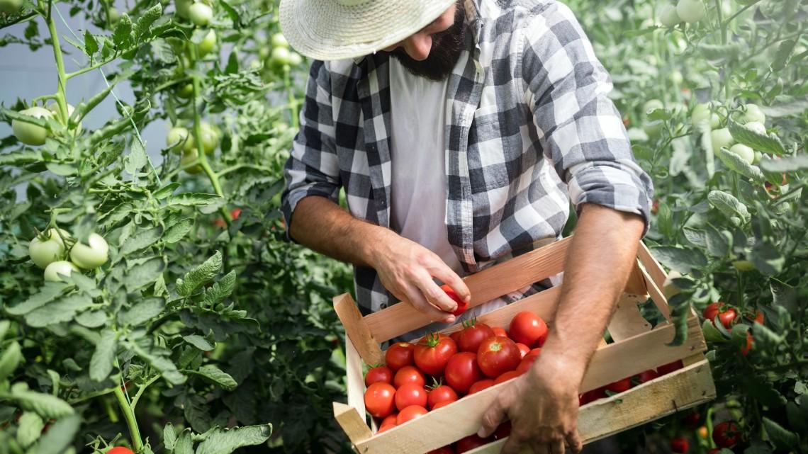 Nehéz éve volt a magyar gazdáknak: így játszadozott velük az időjárás