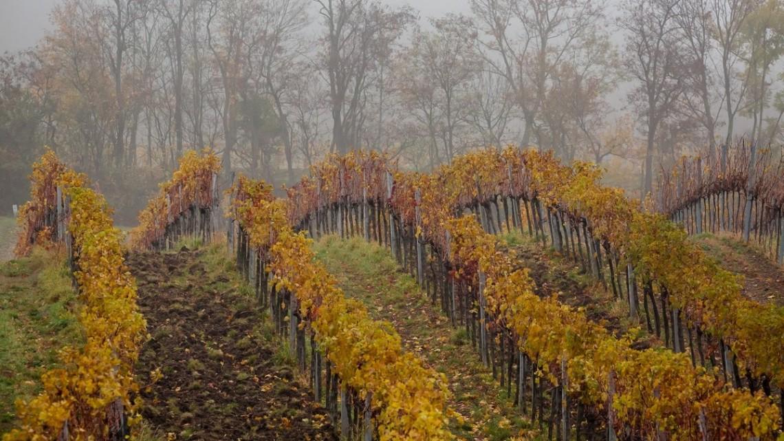 Durván jó évet zárhatnak a magyar borászok: itt a nagy szüreti körkép