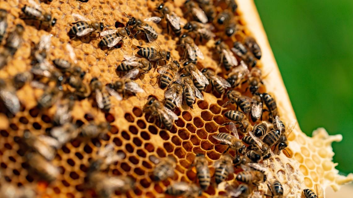 Nagy bajban van a magyar méz: hiába a prémium minőség, ha nincs összefogás