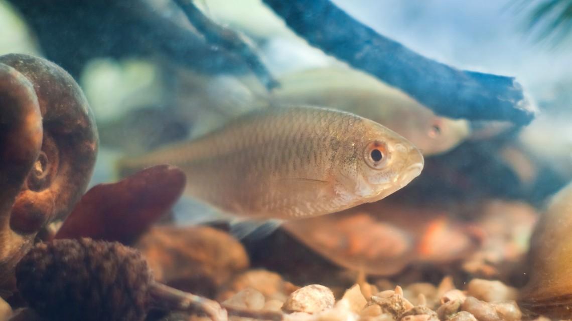 Indul a halszépségverseny: már lehet szavazni az év halára