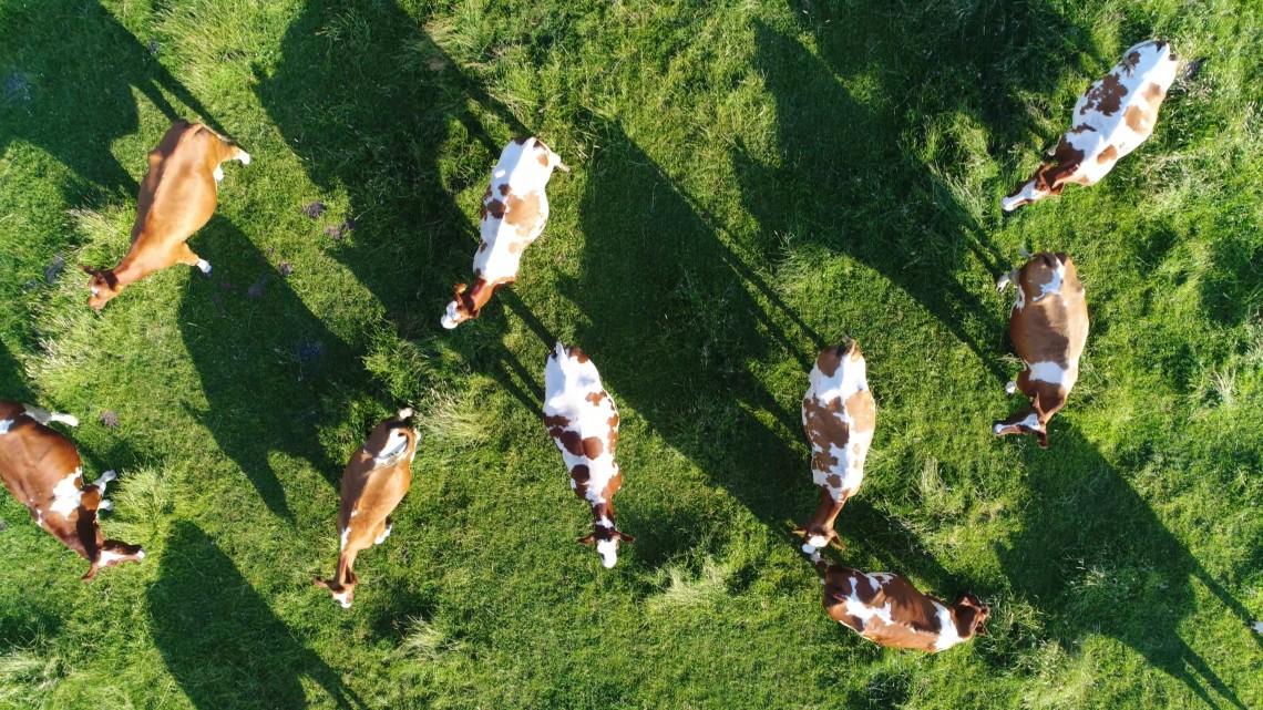Kiderült, hova viszik a magyar gazdák a legtöbb szarvasmarhát