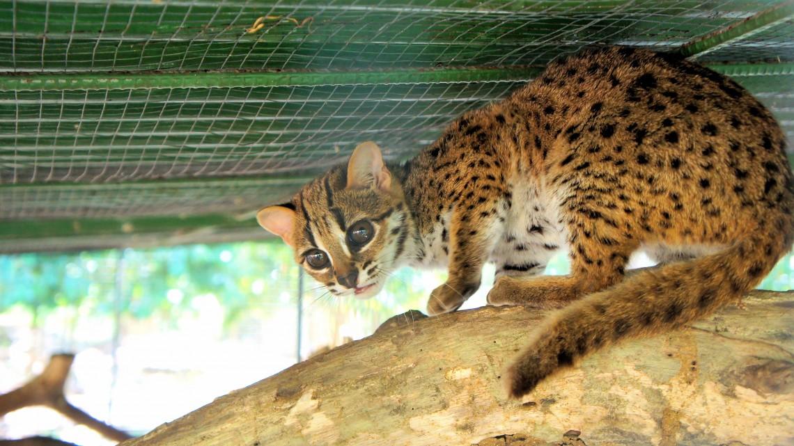 Magyarország is hozzájárul a veszélyeztetett állatfajok kihalása elleni küzdelemhez