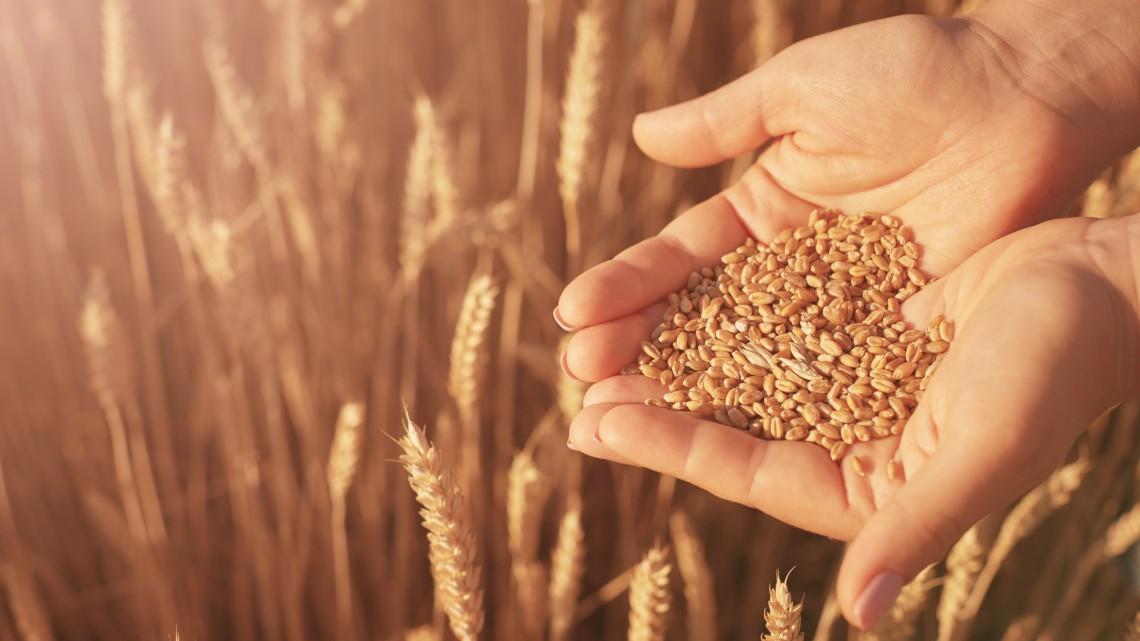 Nagy lehetőségek vannak a növényi olajokban: új irány magyar mezőgazdaságban!