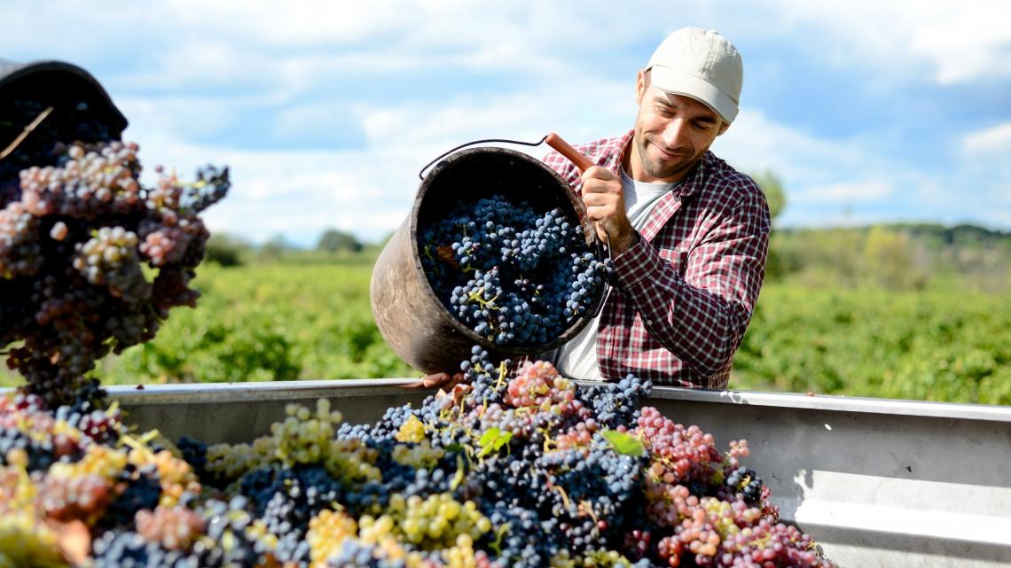 Felkopik az álluk a borászoknak: keresik a megoldást