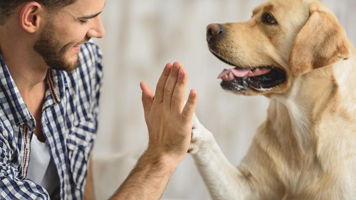 Nem is gondolnád, mennyire sok dologban hasonlít az ember viselkedése a kutyákéra