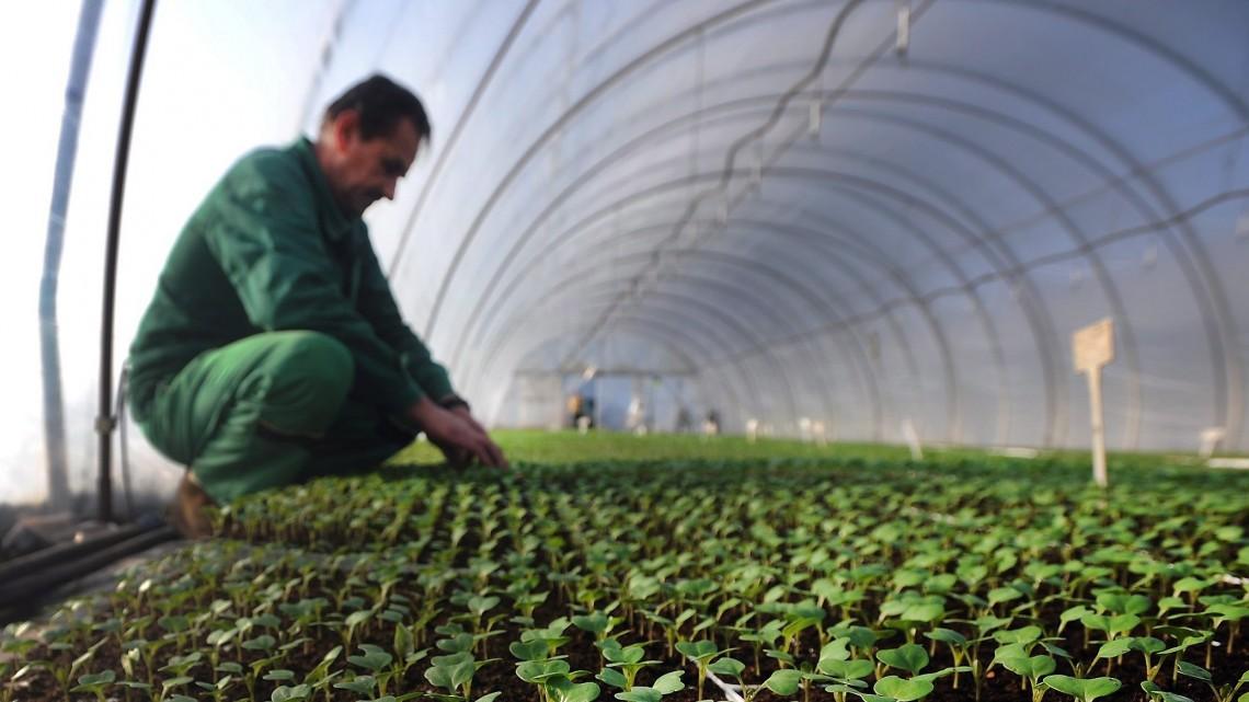 Meg lehet élni háztáji kistermelőként Magyarországon? Kiszámoltuk!