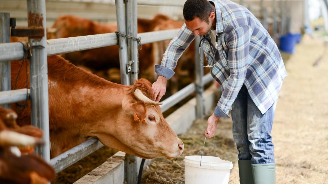 192,5 milliárdból újulhat meg a hazai állattartás: mutatjuk, ki kapja a legtöbb pénzt