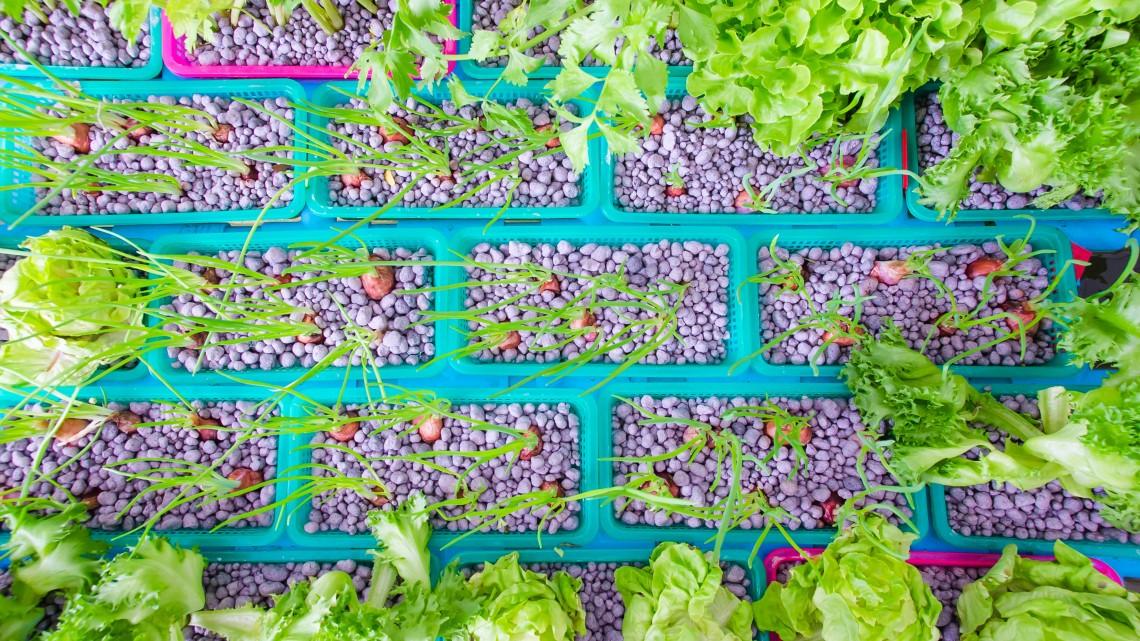Halürülékből friss zöldség: agrárforradalom vagy szemfényvesztés?