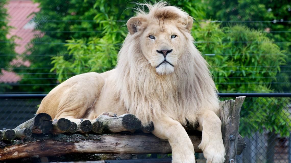 Európában is egyedülálló fejlesztésbe fogtak Nyíregyházán: így újul meg az állatpark