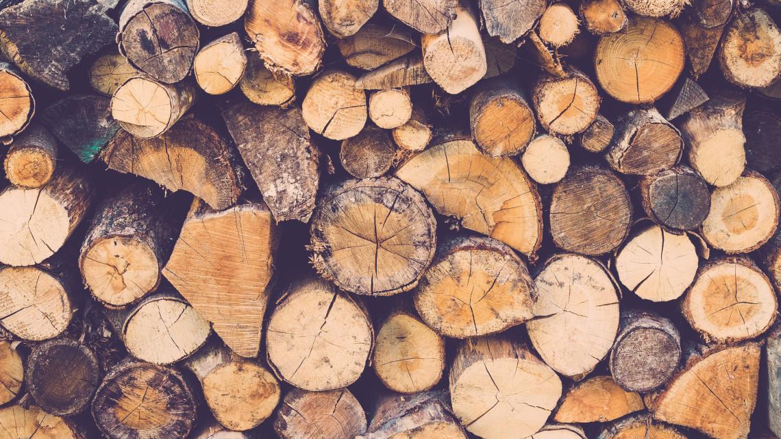 Az erdőgazdaságok idén is segítenek: biztosított a szociális tűzifa mennyisége