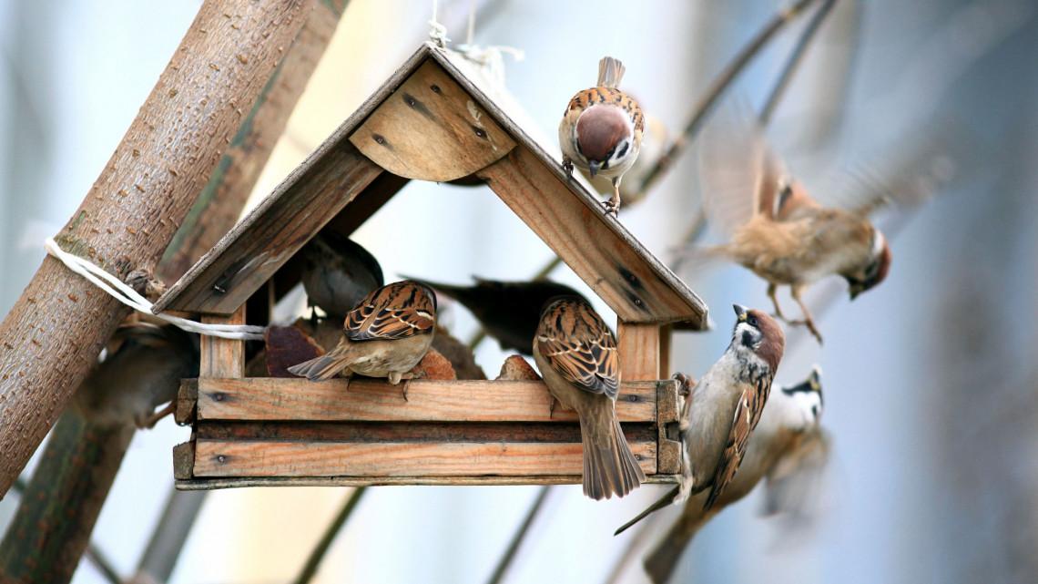 Nálatok is van a kertben madáretető? Jobb, ha tudod: betegségek gócpontjává válhat!