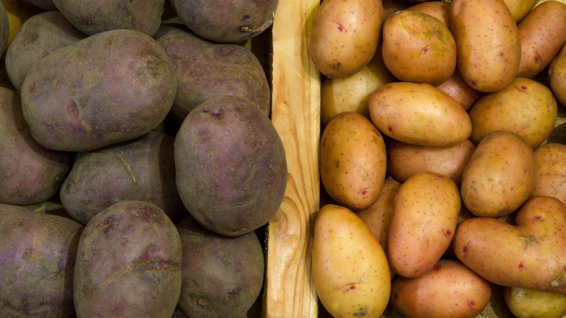 Nem feltétlen a legolcsóbb a legjobb: veszélyes burgonyafajták is kerülhetnek a piacra