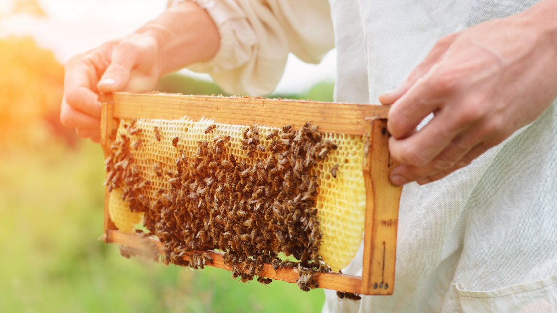 Több támogatás, komolyabb szabályozás: előtérben a magyar méz
