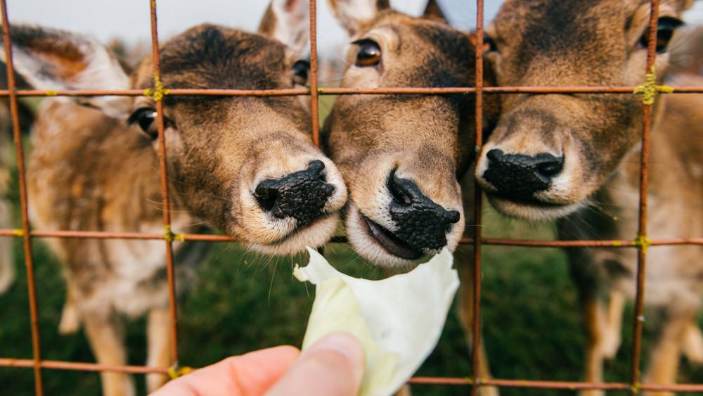 Rengetegen kíváncsiak a magyarországi állatkertekre: jó évet zárnak idén