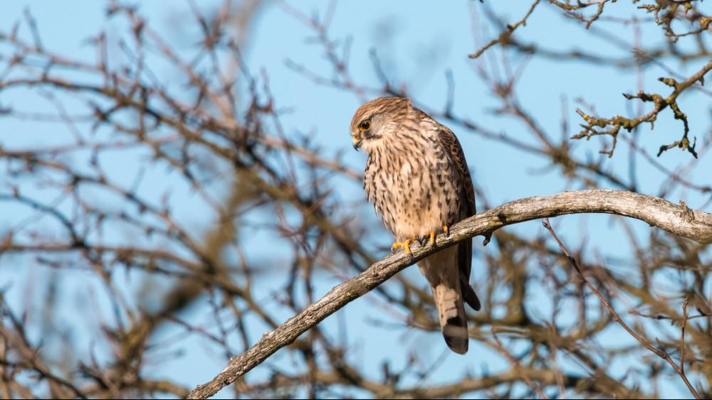 Nagy lépés a természetvédelemben: madárvédelmi megállapodás született