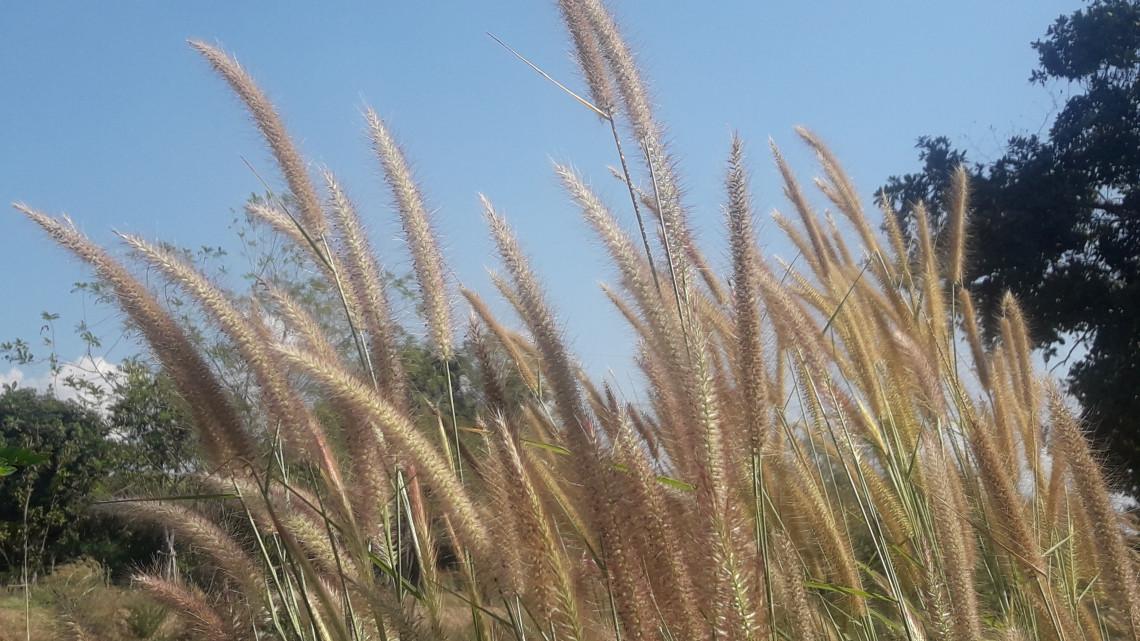 Külföldi előadókkal tenné vonzóvá a mezőgadasági pályát az agrárminiszter