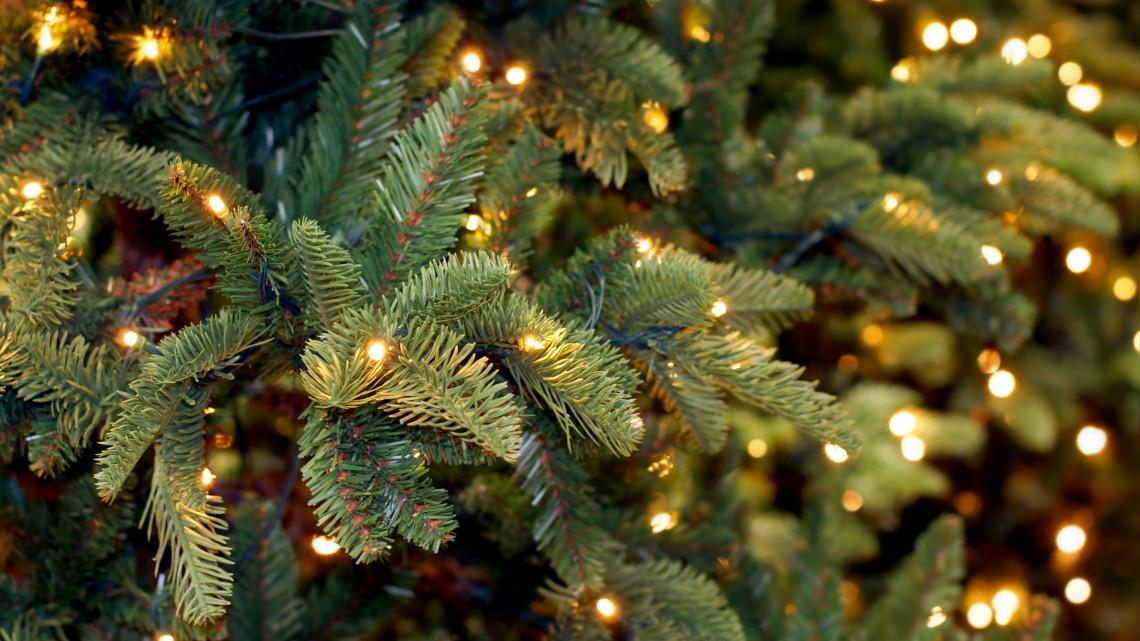 Szomorú karácsony: elbúcsúzhatunk a kedvenc fenyőfajtánktól?