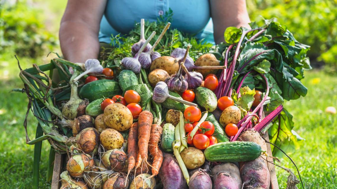 Nonszensz: átutazik Európán a magyar búza, hogy biolisztként árulják a hazai boltokban