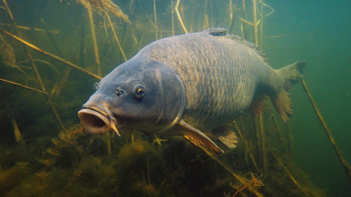 Egyre bőségesebb, és jobb minőségű halat fogyasztunk