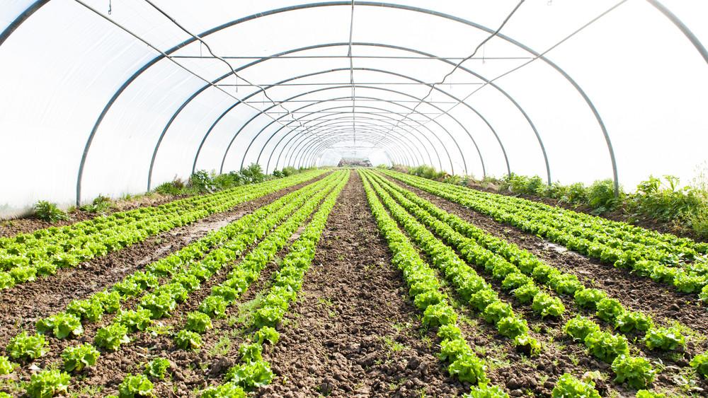 Nagy előrelépés a mezőgazdaságban: duplájára nőtt a üvegházi termesztőfelület-kapacitás