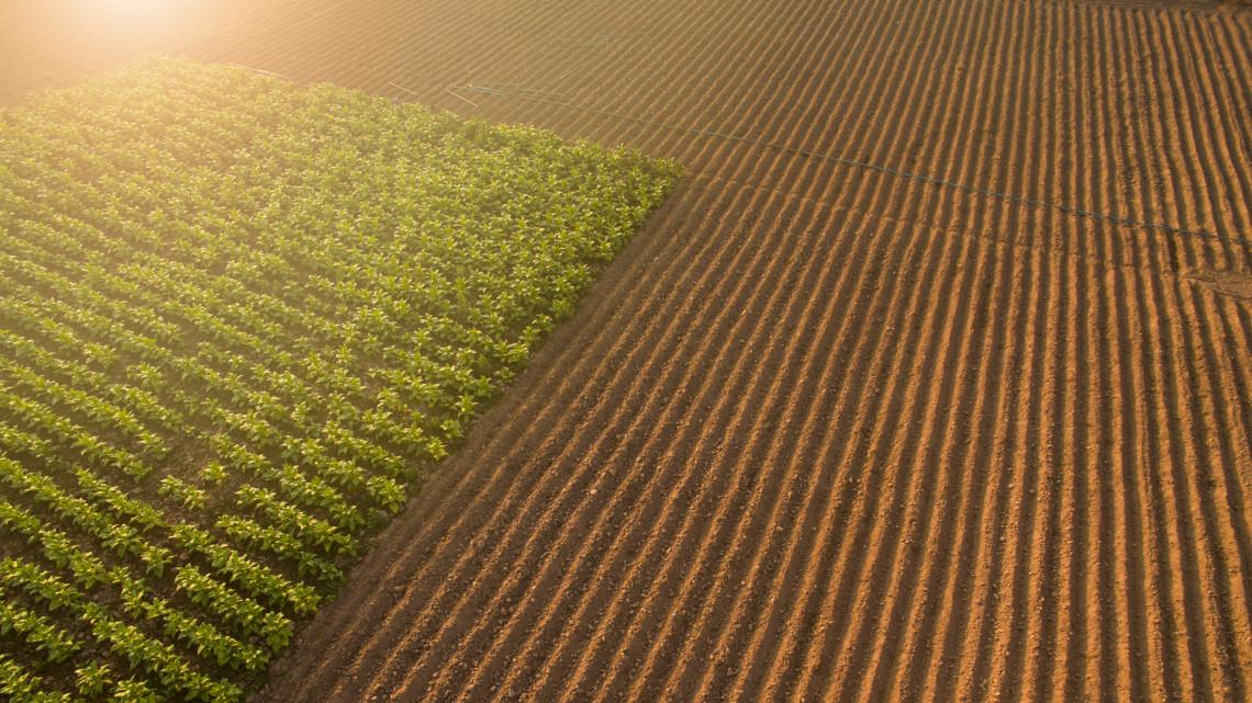Bevezetik a hatósági árat: megszűnik a földpiac