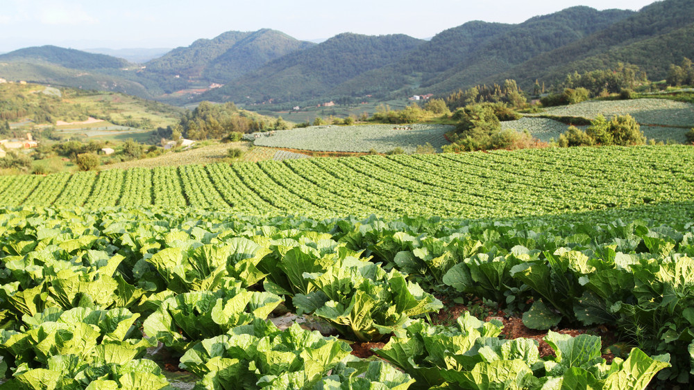 Lesújtó jelentés: a bioagrárium miatt pusztulhat ki az emberiség?