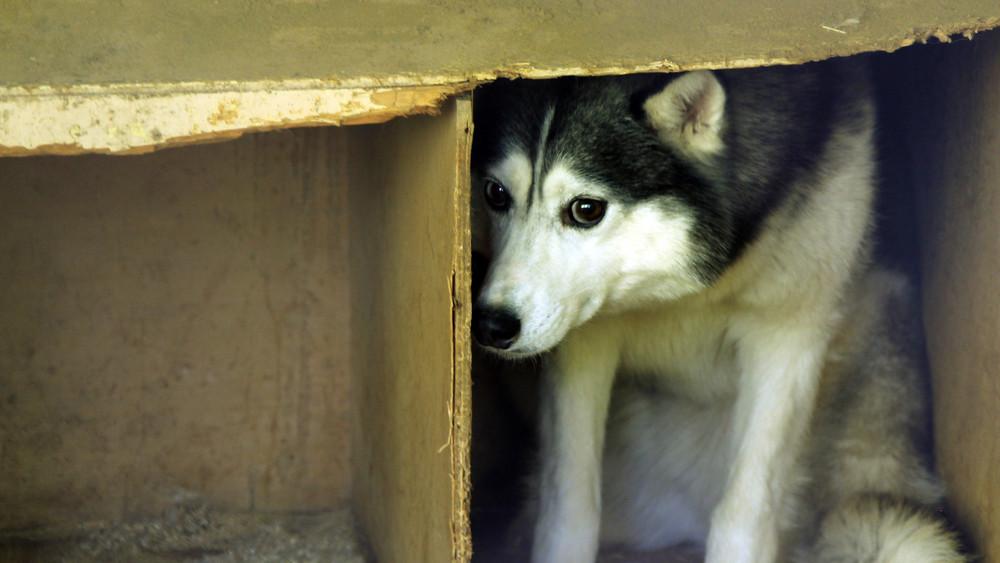Kutyák ezrei szaladnak világgá minden évben: így úszhatod meg a katasztrófát