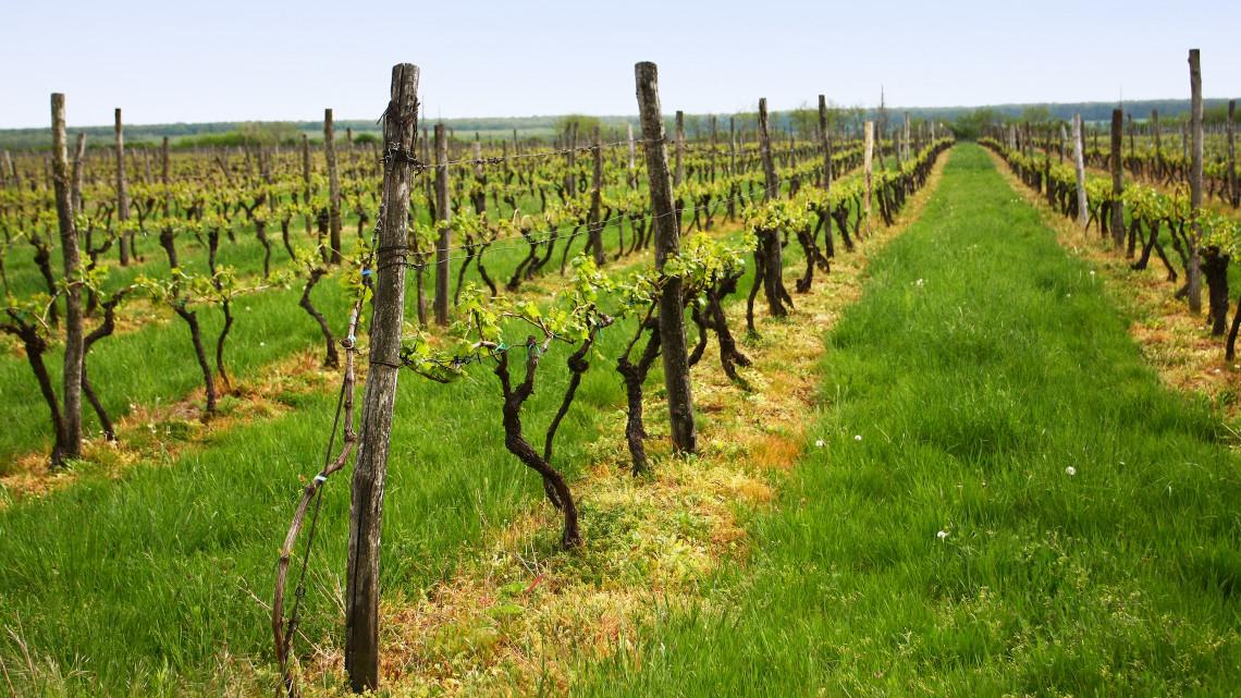 Itt a bizonyíték, világhírűek a magyar borok: lovaggá ütöttek egy villányi borászt