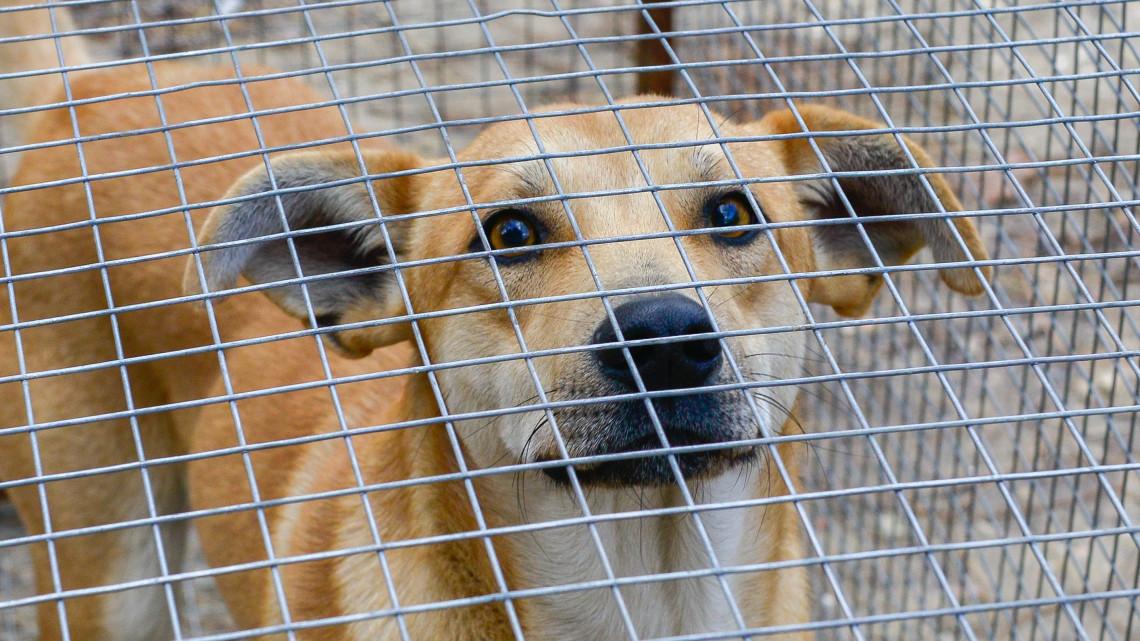Felelőtlen állattartás: több százezer kóbor kutya van Magyarországon
