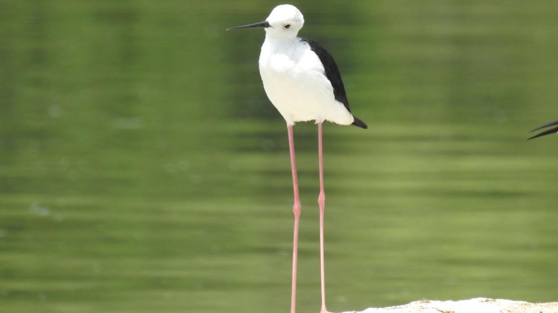 Ez az aranyos-vicces kinézetű minigólya lett az év madara