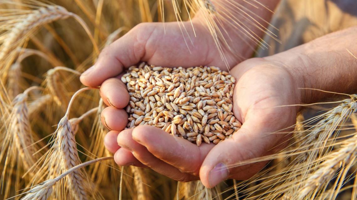 Eldőlt: marad a gabonafélék fordított adózása