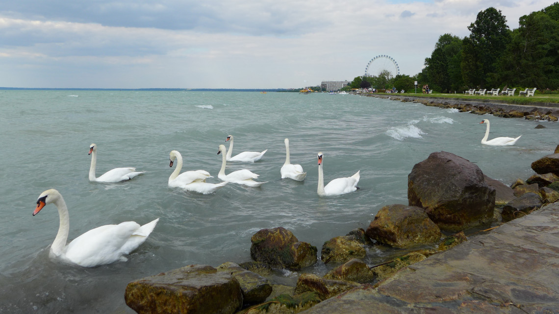 Műsoron a legjobb természetfilmek: külföldön is hódít a Balaton