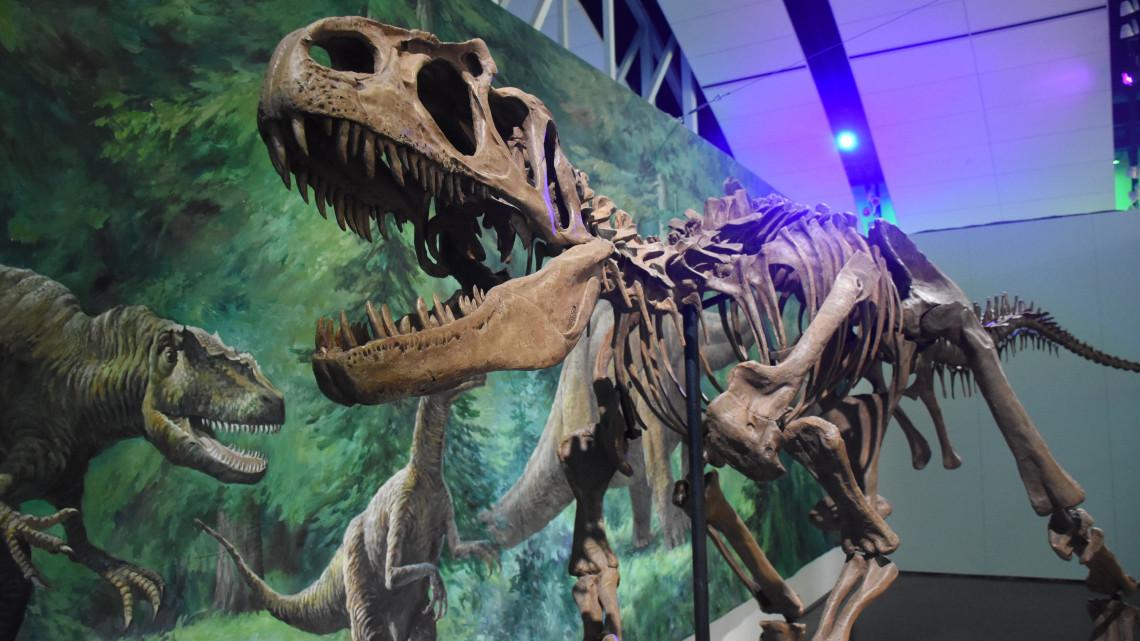 Rekordszámú látogató volt kíváncsi a szegedi dinoszauruszokra