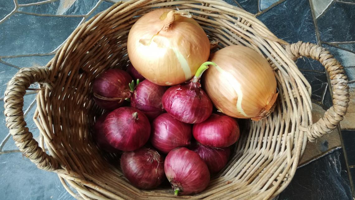 Ezeket a zöldségeket, gyümölcsöket soha ne rakd a hűtőbe: mutatjuk, miért