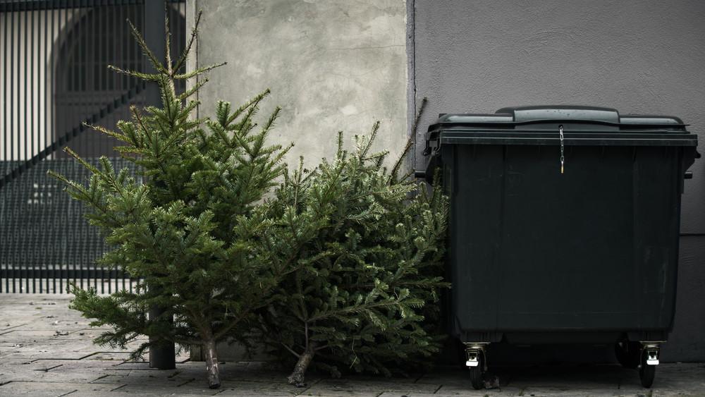 Országszerte megkezdődött a kidobott karácsonyfák begyűjtése