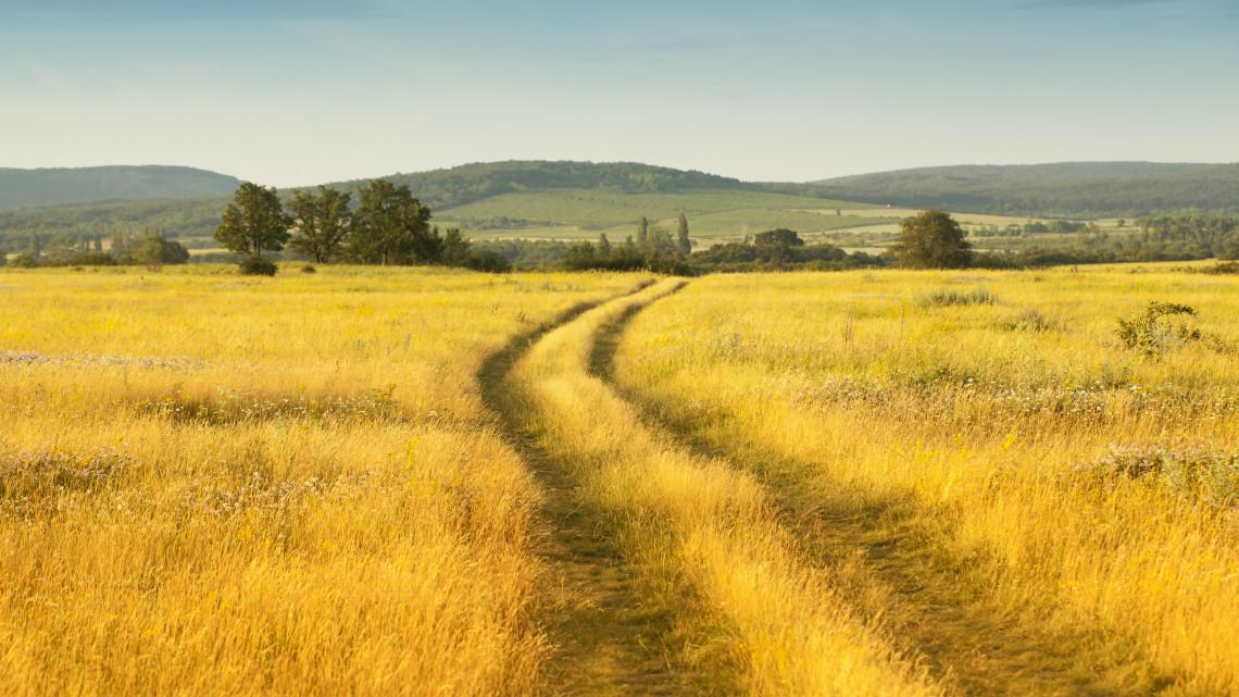 Átalakulóban a magyar vidék: ez történt tavaly a mezőgazdaságban