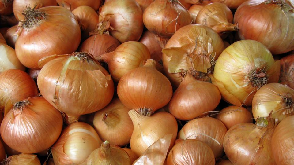 Az Agrárkamara tovább növelné a magyar vöröshagyma versenyképességét