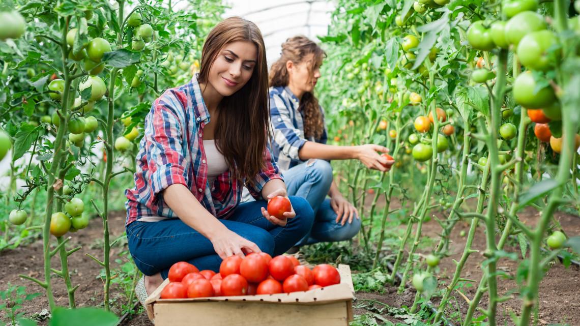 Generációváltás a mezőgazdaságban: előtérben a fiatal gazdák