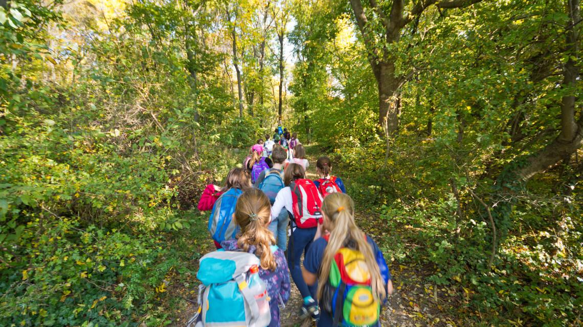 Környezettudatos nevelés: nagy szerepe van a nyári táboroknak