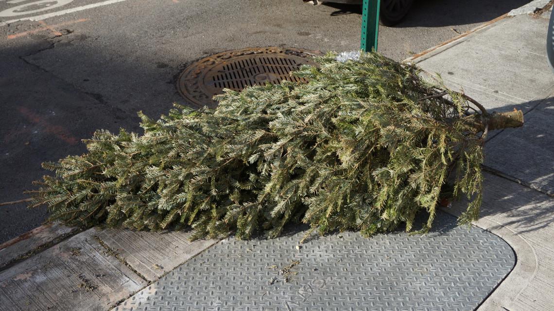 Ez aztán az újrahasznosítás: Pécsett a kidobott karácsonyfákkal fűtenek