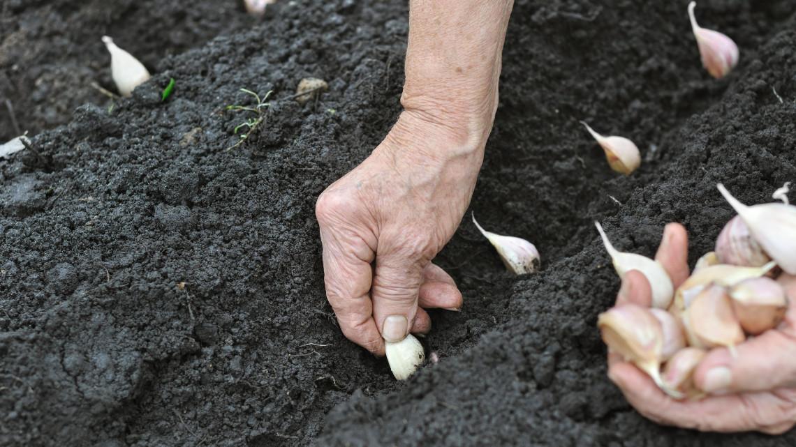 Indul a konyhakerti és kisállattartási szociális földprogram: 28 ezer magyar juthat támogatáshoz