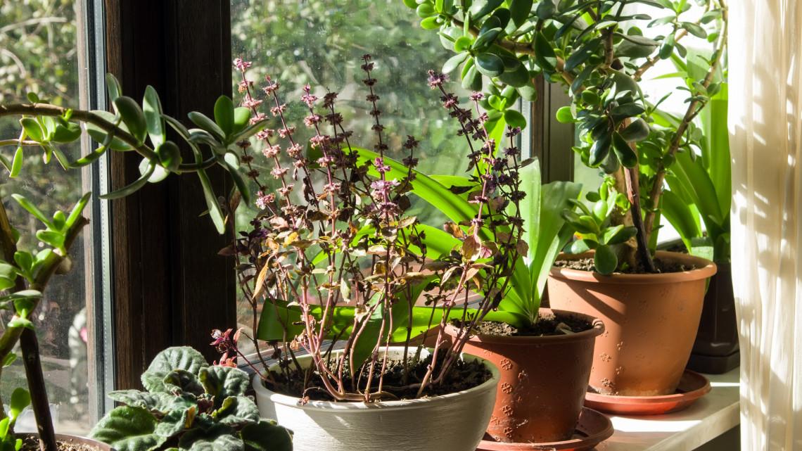 Pusztulnak nálad a szobanövények? Ez a 15 szívós fajta mindent túlél