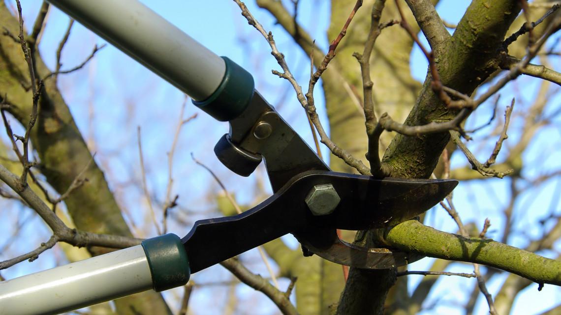 Akié a fa, annak kell metszeni: megkezdődött a fák gallyazásának ideje