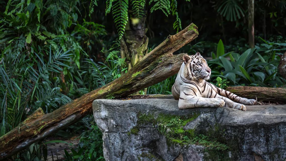 Ennyit még sosem kaszált a pécsi állatkert: ezekkel a különleges programokkal csalogatta a látogatókat
