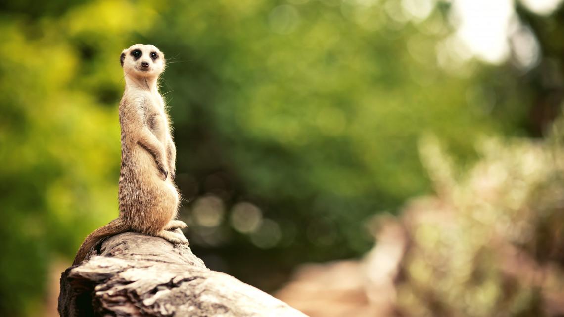 Így ünnepel a Szegedi Vadaspark: 30 éves Magyarország legfiatalabb állatkertje