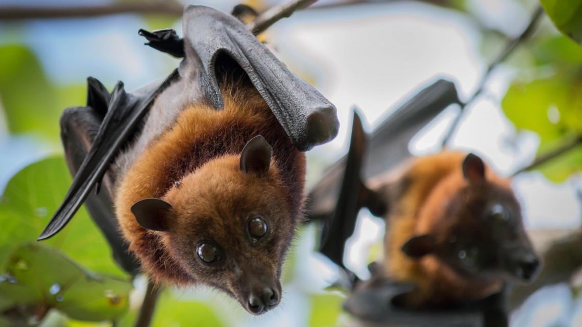 5 szuperhasznos állatfaj, ami nélkül már rég kihalt volna az emberiség